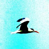 Alternative Tern