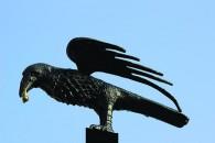 Perching Raven